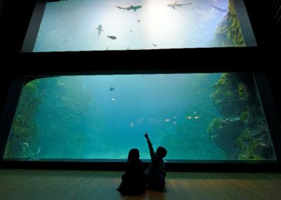 Lyon – Aquarium de Lyon – 550 personnes